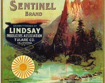Lindsay- Sentinel Orange Citrus Fruit Crate Box Label Art Print