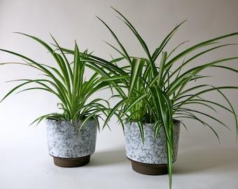 Set Of 2 Ceramic Planters   Indoor Plant Pots   Flower Pots   German  Pottery