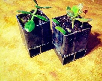 Steel succulent planters