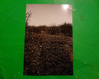 Photo Print: Wilderness