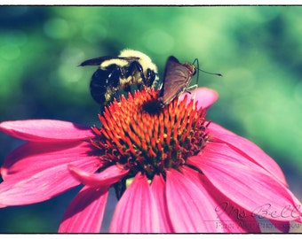 Nature Photography - Bee and Butterfly - fine art print - 8x12 - green teal pink orange fuchsia summer bee butterfly flower home decor