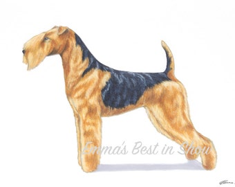 Lakeland Terrier Dog - Archival Fine Art Print - AKC Best in Show Champion - Breed Standard - Terrier Group - Original Art Print