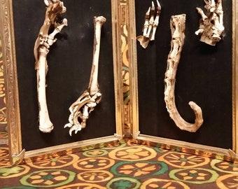 Framed possum bones