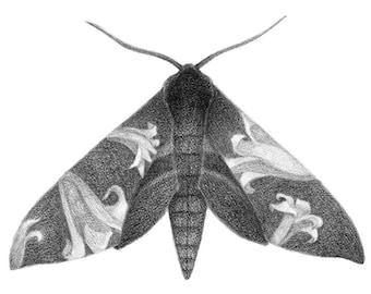 Sphinx Moth + Lilies - 5x7 print