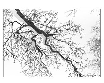 Black and White Photography, Winter Snow Photograph,  New England Tree,  Holiday Decor, Monochromatic Winter Landscape Wall Decor