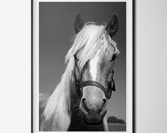Black & White Horse Print, Horse Photography, Animal Printable, INSTANT DOWNLOAD, 24x36 Poster Print, Modern Home Decor, Digital Download