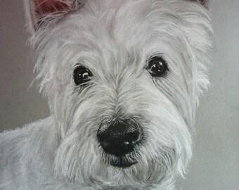 Westie pet portrait a3 example of  a custom pet portrait of your pet.