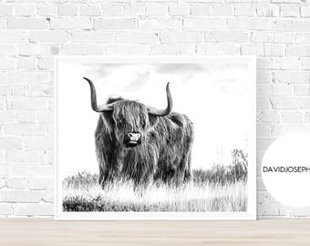 Highland Cow Print, Farm Animal Wall Art, Black and White, Animal Print, Cow Photography, Cattle Print, Digital Download, Cow Decor