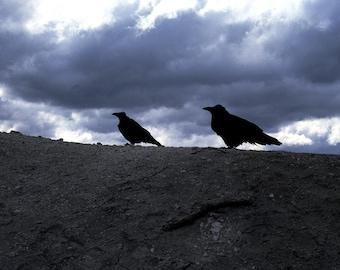 Ravens & Ominous Sky