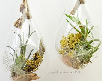 Rope terrarium // air plant - lichen terrarium // hanging terrarium // living home decor // green gift