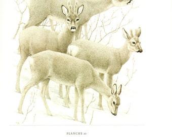 1970 Vintage roe deer print vintage animal art Roe poster French print deer poster Deer art Wildlife poster Wildlife art Deer gift Deer herd