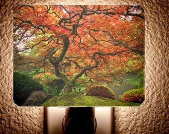Maple Beauty Night Light