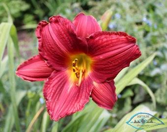 Beautiful Flower, Close-up