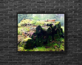 Logs Photo - Moss Photo - Woodland Photo - Nature Photo - Forest Landscape Photo - Forest Photo - Forest Wall Art - Forest Wall Decor