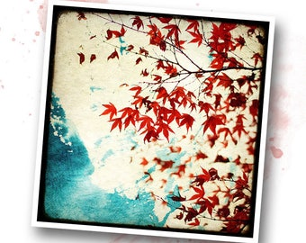 Autumn red - Nature - photo art signed 20 x 20 cm