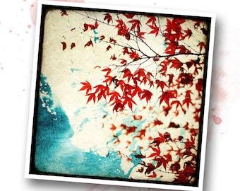 Automne Rouge - Nature - photo d'art signée 20x20 cm