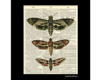 Vintage Moth Illustrations - Dictionary Art Page - Book Page Art - Home Decor No. P236