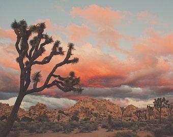 Joshua Tree sunset photograph, desert print, Southwest decor, Coachella art, Palm Springs travel photography, California wall art, landscape