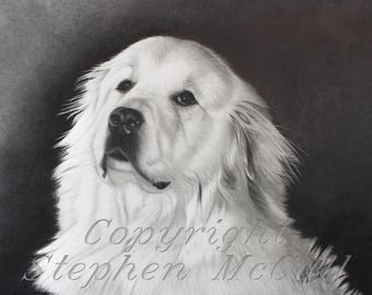 "Giclee art print of Great Pyrenees pencil drawing ""Chance the Great"", great pyrenees, dog art, dog drawings, dog paintings, dog portraits"
