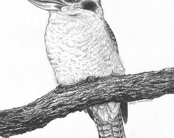 Kookaburra drawing print - 8x10 inches (20x25cm) Australian Bird Art Print - giclee, nature decor, woodland art, black and white