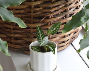 Straight Riveted Planter - Mini