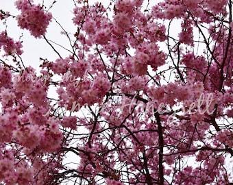 Blossom photo (landscape)