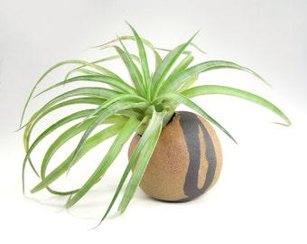 Tan and Black Pinch Pot Vase, Small Round Vase, Air Plant Pod, Pinch Pot Vase, Small Ceramic Pinch Pod, Weed Pot 10-15-17