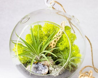Air Plant Terrarium With 4 Round Glass Blue Rocks Moss And