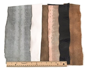 Snake Skin Snakeskin Pieces, Grab Bag- Assorted Colors, 6 Feet, 6 Pieces