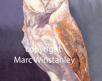 Barn Owl watercolour painting