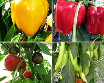 Sweet Pepper Plant Sampler, 6 Plants