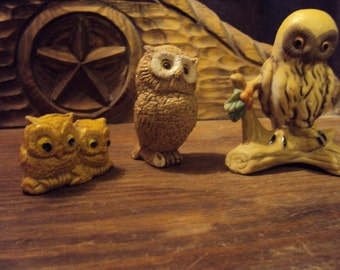 Injured owls