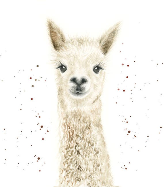Llama Gifts Llama Print Llama Art Alpaca Wall Art Alpaca
