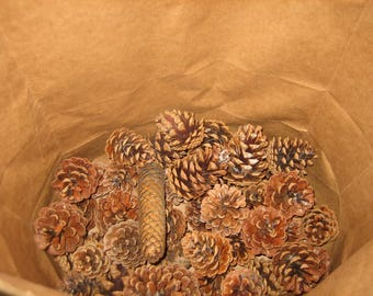 Bulk 50 Clean Baked Pine Cones Critter Free Craft Ready - Sack Of 50 Craft Ready Michigan Pine Cones Naturz Nuttz