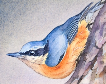 Nuthatch Bird Painting ACEO Print, Small Artist Trading Card, Miniature Art