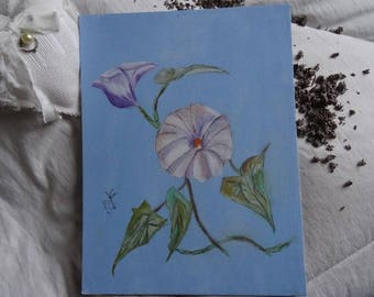 No. 14 painting in acrylic on cardboard, bindweed, background light, pastel blue flower