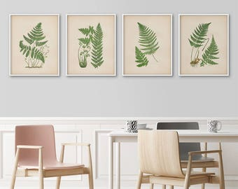 Botanical print set of 4, Fern prints, Botanical illustrations, Large botanical prints, Vintage botanical, Antique botanical, Kitchen prints