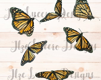 Butterfly Monarch Clip Art PNG file Digital Photo Prop / Overlay / Digital Scrapbooking