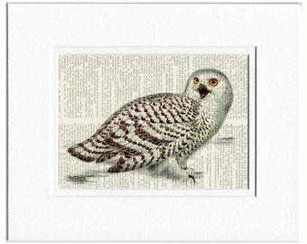 owl - Snowy white owl print