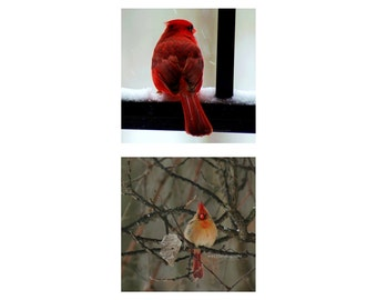 "Cardinal Photos, Nature Pictures, Birds, Animal photography, Gift Set of f Two 5x5 inch Red Cardinal Photos, Parents - ""Cardinal Pair"""
