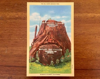 Unused Redwood Highway, California Postcard / Vintage Photograph Souvenir /Del Norte Wonder Tree /Nature /Craft Supply /Ephemera / Scrapbook
