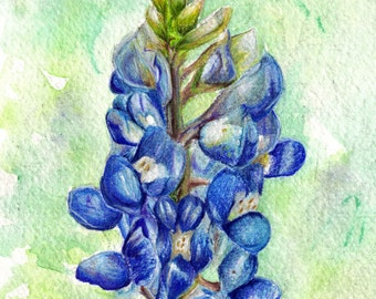 PRINT - Texas Bluebonnet Watercolor and Colored Pencil Art by Ela Steel Wildflower spring blue green drawing painting garden state flower