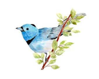 Bluebird Print, Watercolor Bluebird, Passerine Thrush bird on Branch, Bluebird Decal, Blue Bird of Happiness, Bird Print