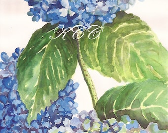 "Fine Art Print of my Watercolor Painting-""Blue Hydrangeas"""