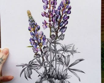 Beautiful Death Tortoise with Coloured Lupins Art Print
