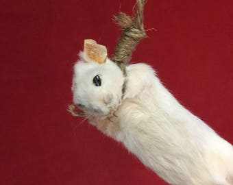 1  Taxidermy Hanging White Mouse Display rear view mirror hanger macabre