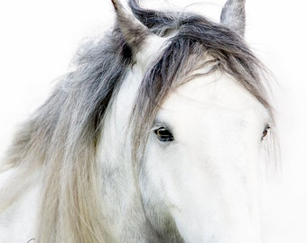 Horse Photography,  Gypsy Vanner, horse photography, Close up horse portrait, fine art equine photography, Horse Print, Horse Picture