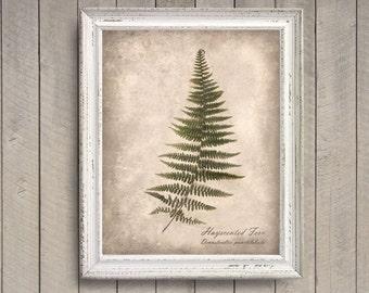 Hayscented Fern Botanical Print - Vintage Style Original Photograph