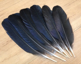Hooded Crow Wing Feathers - crow feathers, raven feathers, black feathers, glossy feathers, wild feathers, smudge feathers, altar feathers