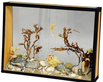 antique natural wunderkammer aquarium specimen